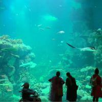 Oman Aquarium, Muscat ***