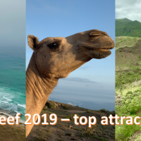 Salalah Khareef 2019 - top attractions in 5 days... with a toddler